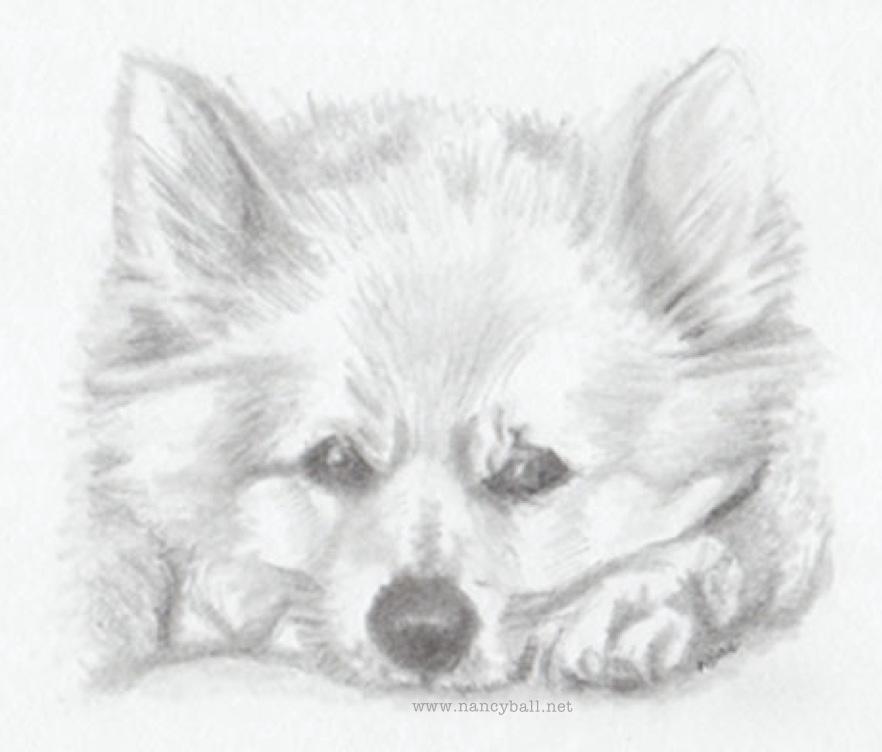 Puppy dog illustration by Nancy Ball